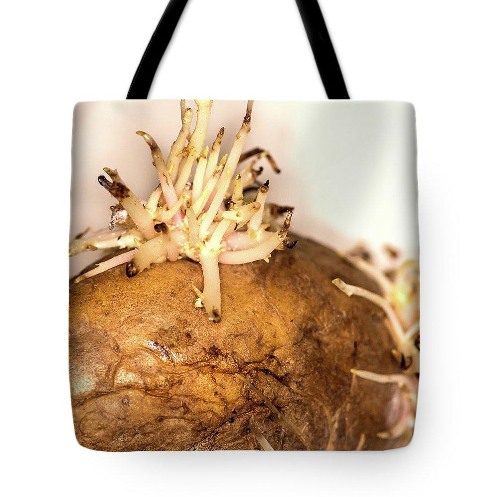 Potato Tote Bag featuring the photograph Sprouting Potato by Jarmo Honkanen