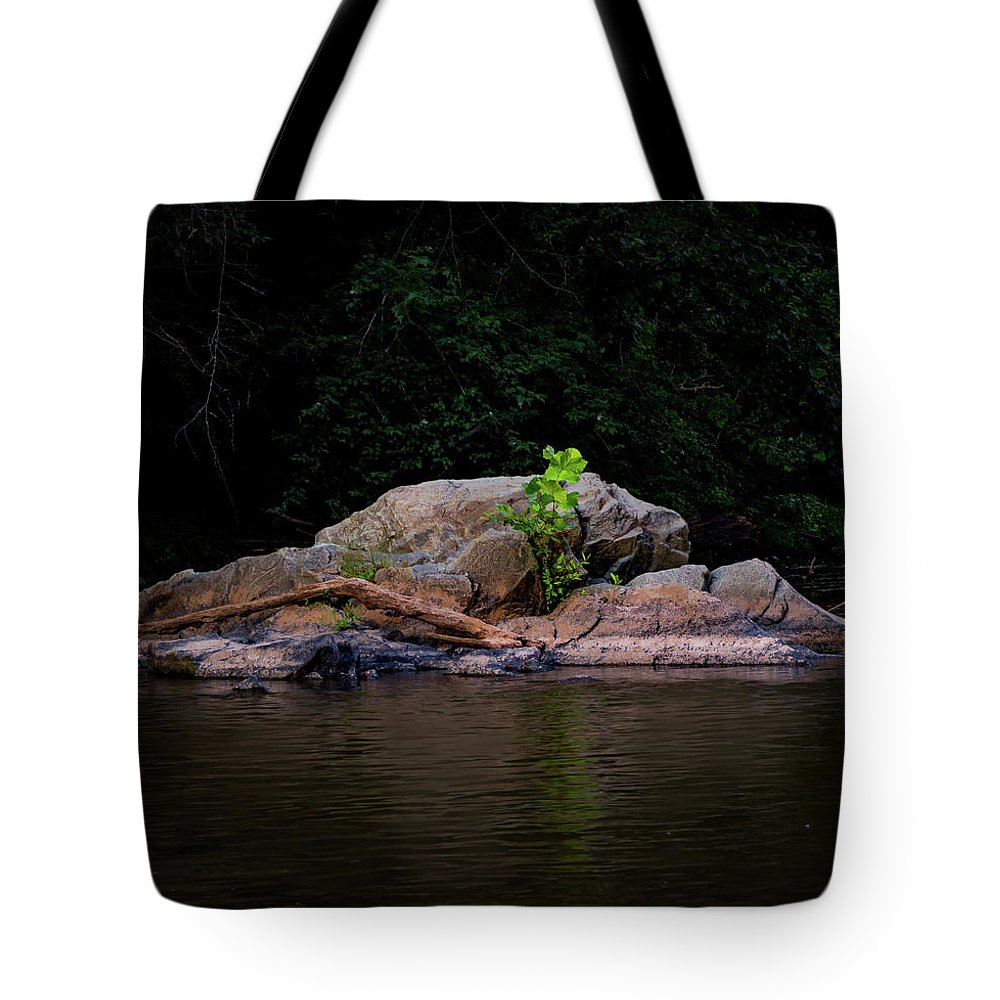 Spring Tote Bag featuring the photograph Sprout by Ant Pruitt