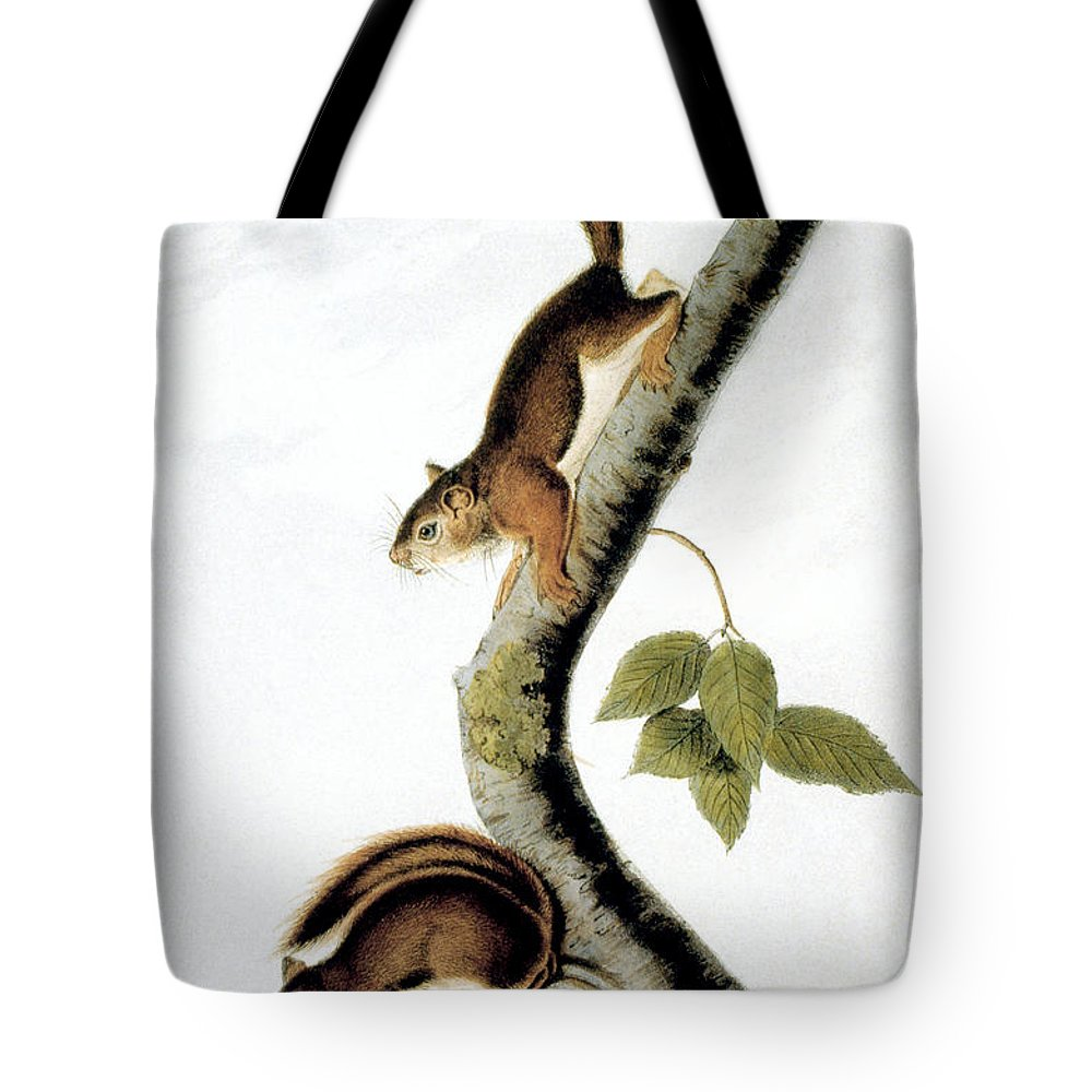 1846 Tote Bag featuring the photograph Squirrel by Granger