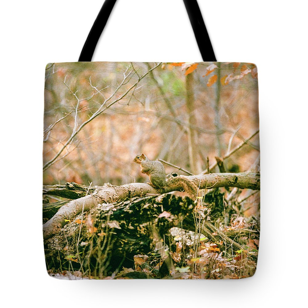 35mm Film Tote Bag featuring the photograph Squirrel In The Woods by John McGraw