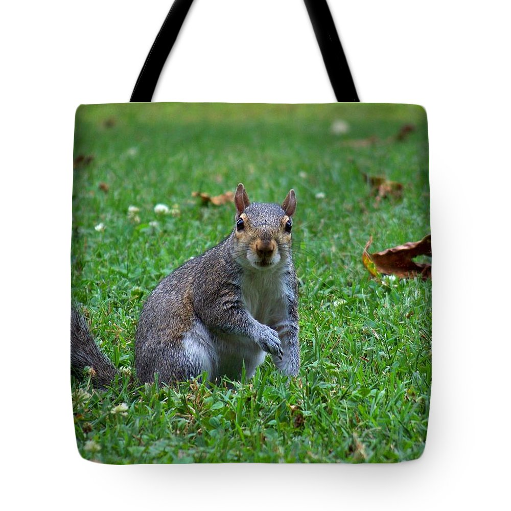 Squirrel Tote Bag featuring the photograph Squirrel Iv by Jai Johnson