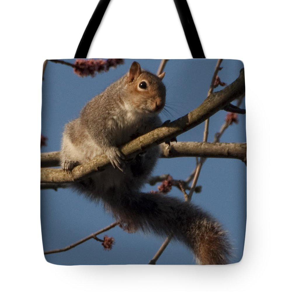 Squirrel Tote Bag featuring the photograph Squirrel by Steven Natanson