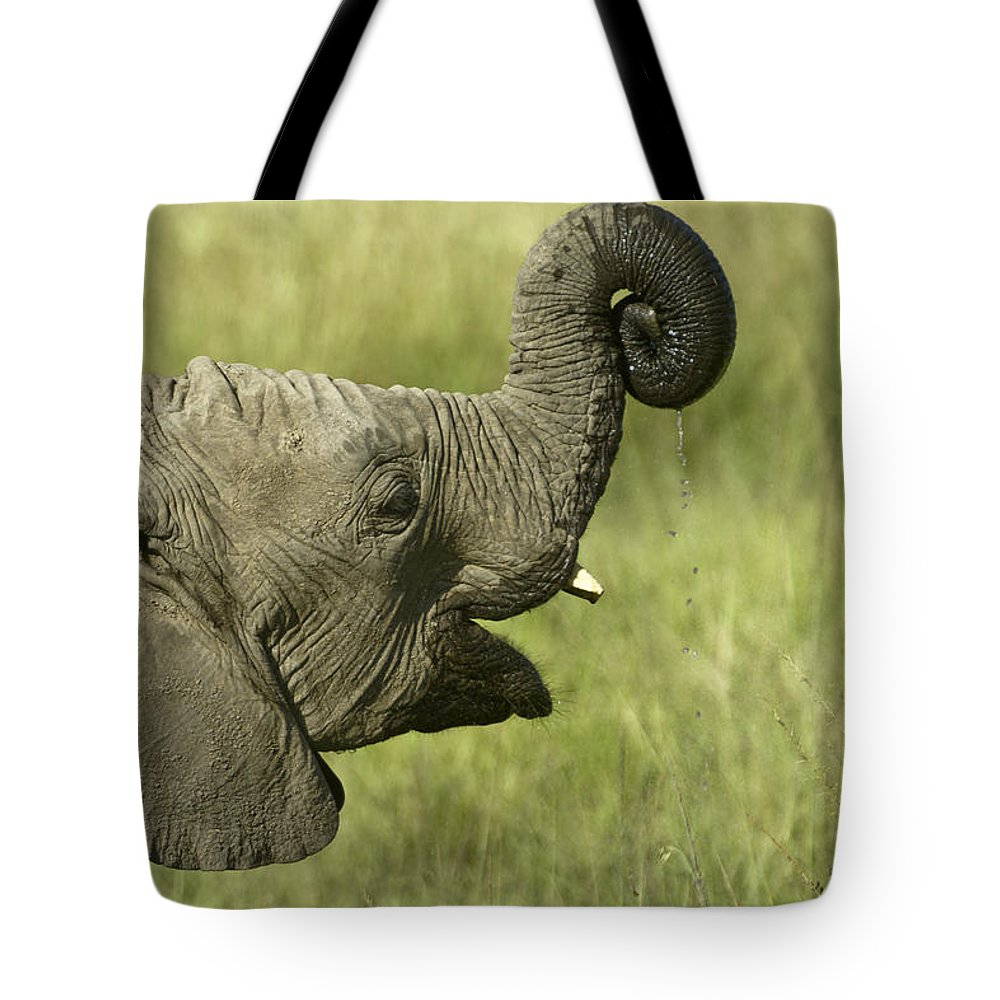 Africa Tote Bag featuring the photograph Squirting Water by Michele Burgess