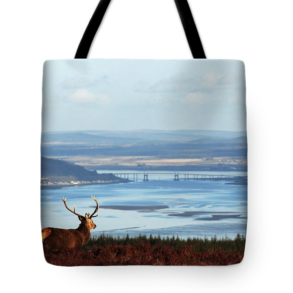 Red Deer Stag Tote Bag featuring the photograph Stag Overlooking The Beauly Firth And Inverness by Gavin Macrae