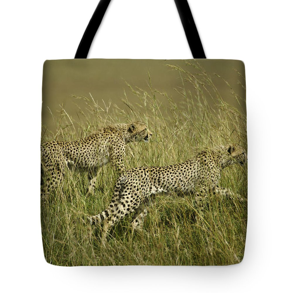 Africa Tote Bag featuring the photograph Stalking Cheetahs by Michele Burgess