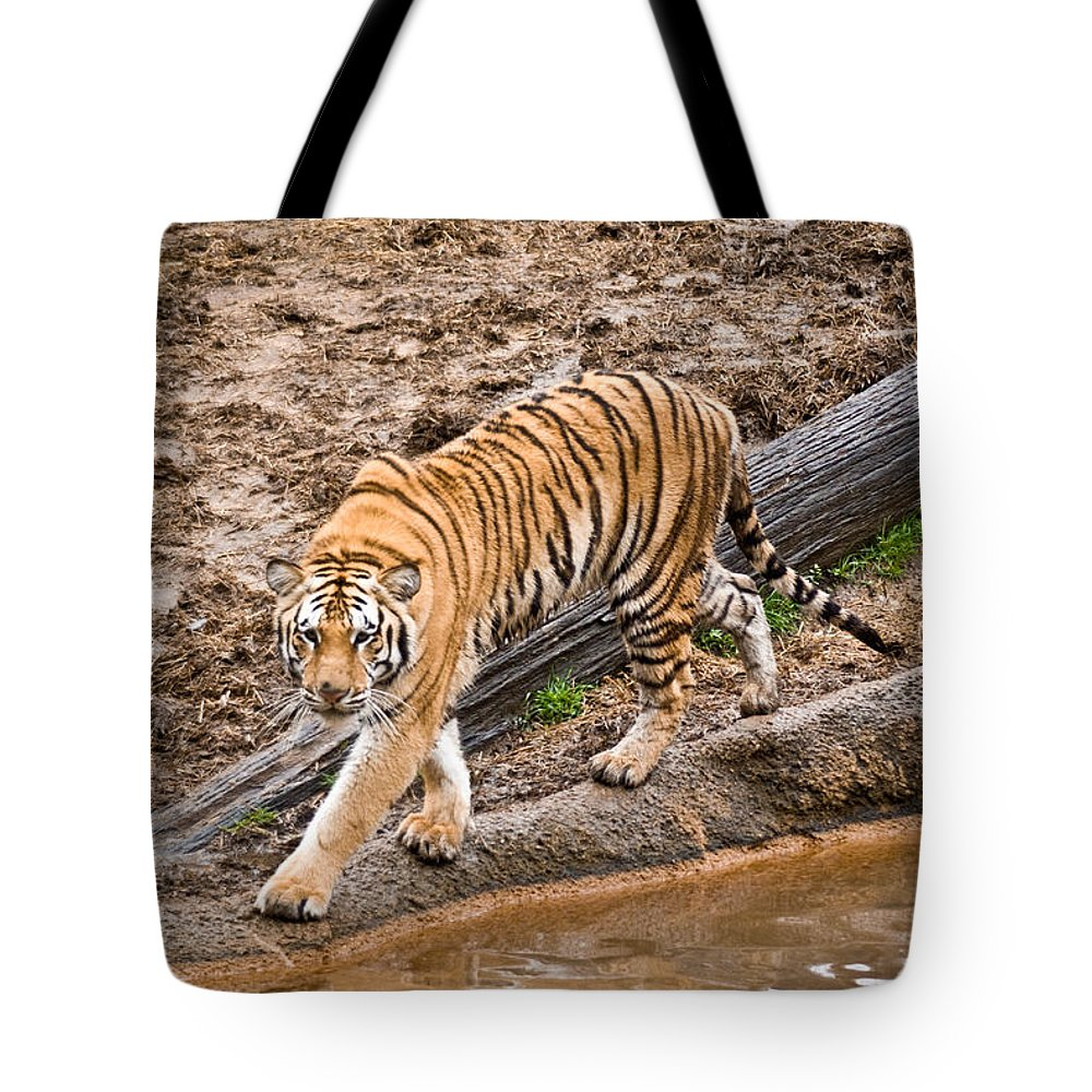 Tiger Tote Bag featuring the photograph Stalking Tiger - Bengal by Douglas Barnett