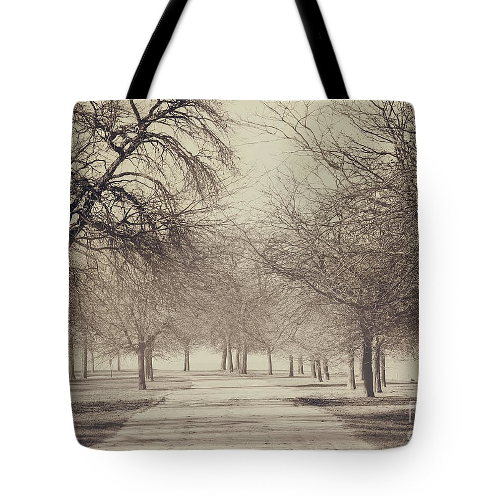 Trees Tote Bag featuring the photograph Stand Where I Stood by Dana DiPasquale