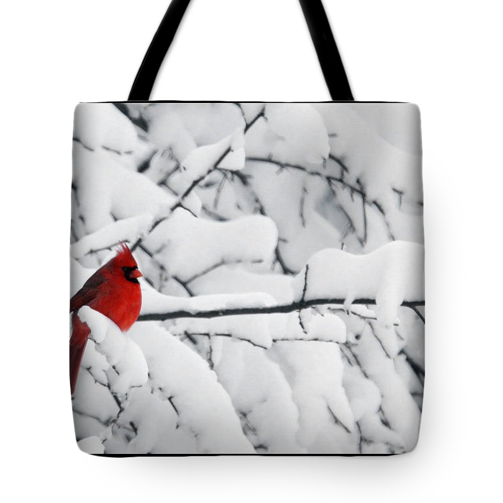 Photography Photographer Cardinal Red Bird Snow Season White Winter Scene Tote Bag featuring the photograph Standing Out by Shari Jardina