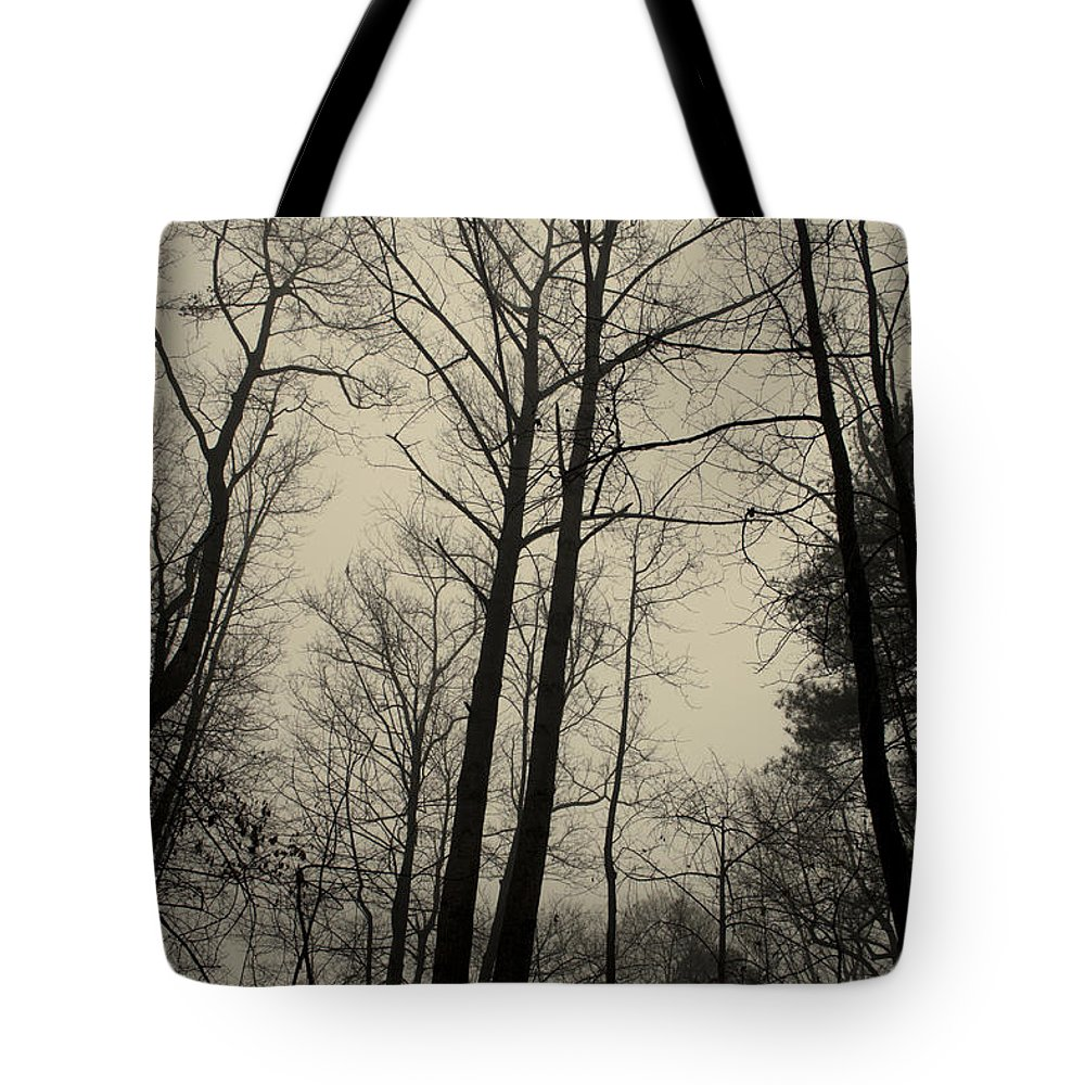 Trees Tote Bag featuring the photograph Standing Tall by Ayesha Lakes