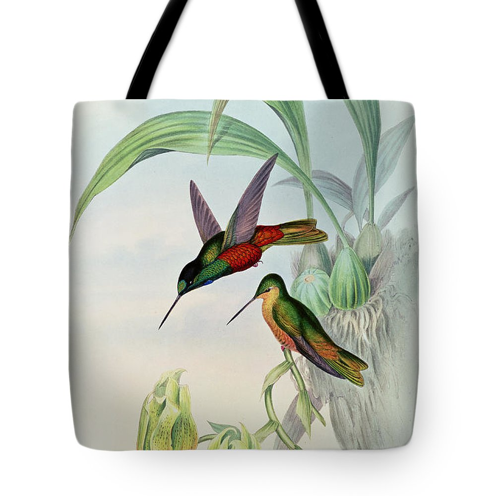 Hummingbird Tote Bag featuring the painting Star Fronted Hummingbird by John Gould