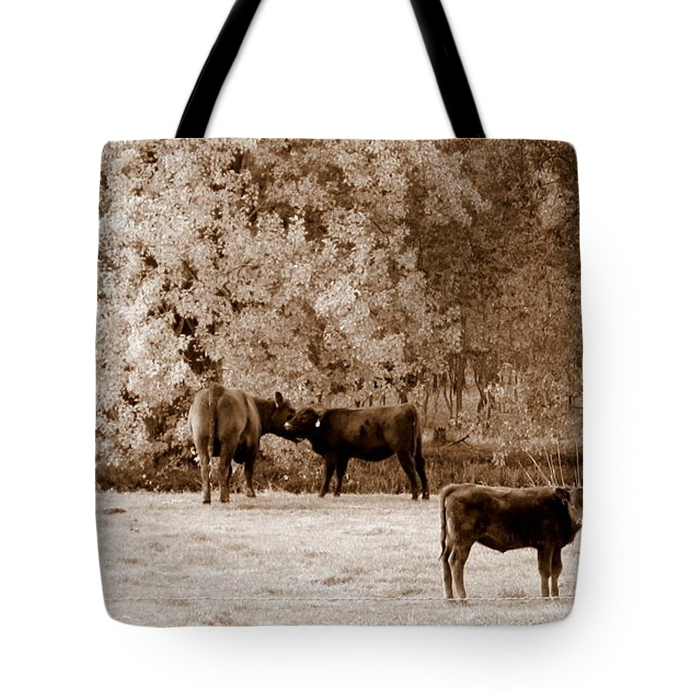 Cows Tote Bag featuring the photograph Stare Down by Joni Moseng