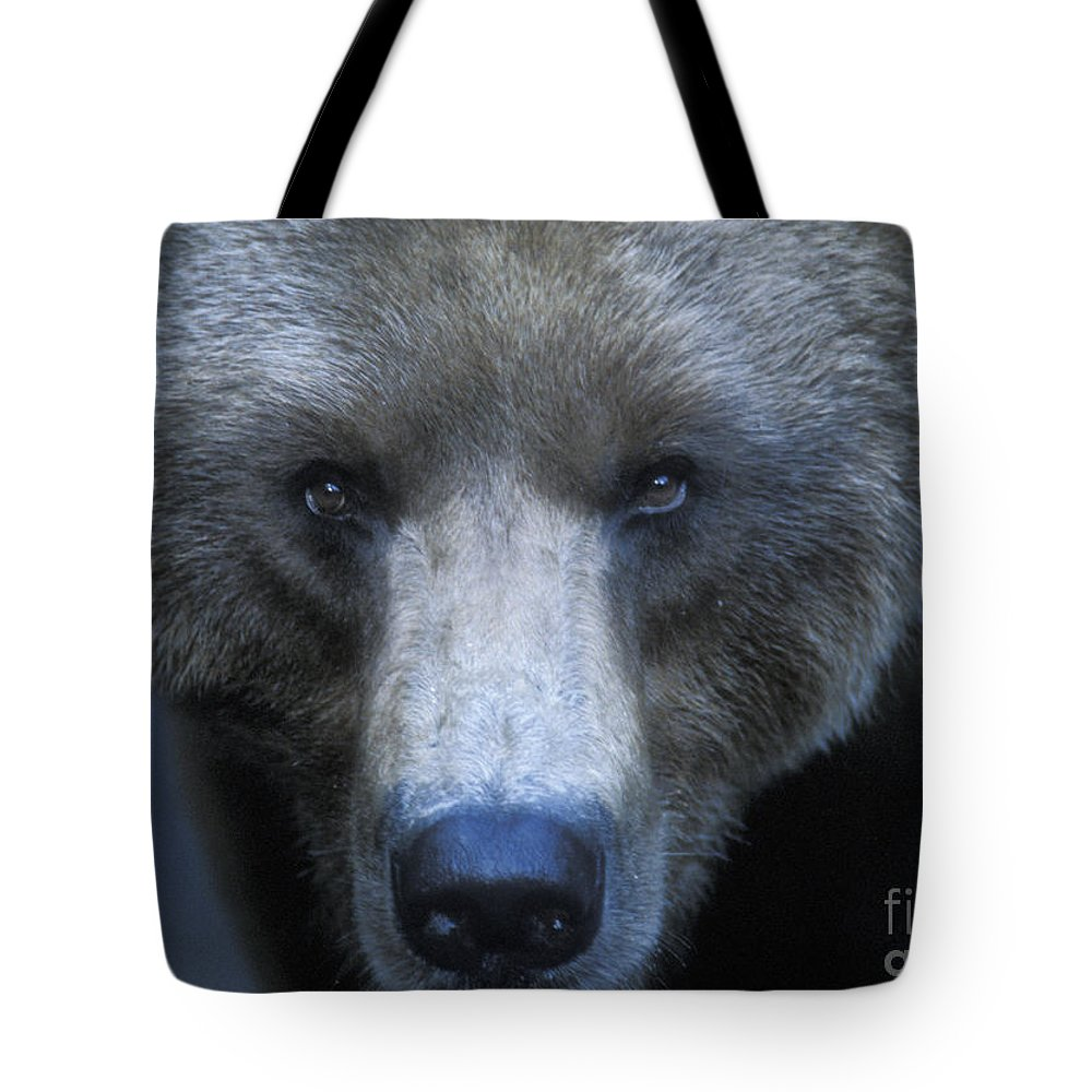 Yellowstone Tote Bag featuring the photograph Stare Down by Sandra Bronstein