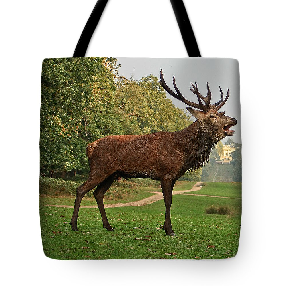 Deer Tote Bag featuring the photograph Stately Stag by Dawn OConnor