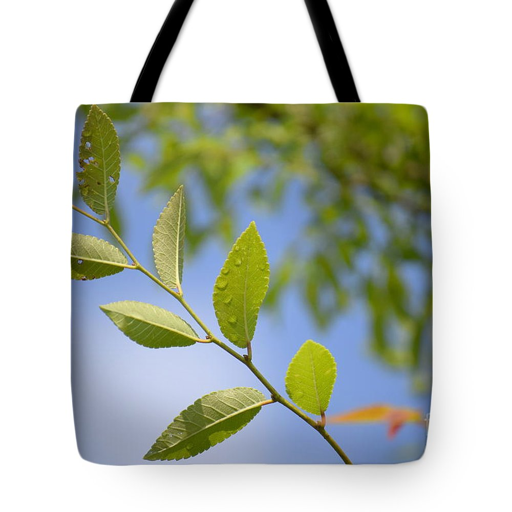 Stem Tote Bag featuring the photograph Stem by Anita Goel