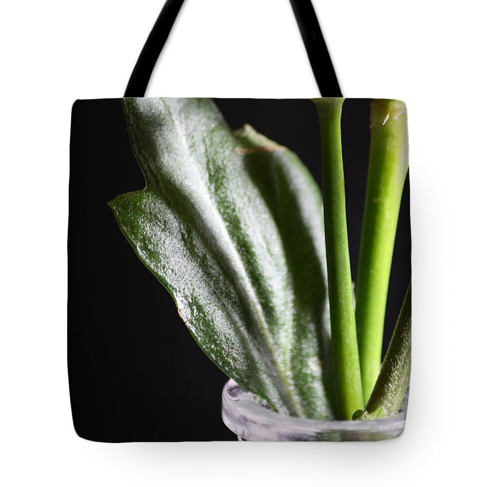 Flowers Tote Bag featuring the photograph Stems by Cynthia Derosier