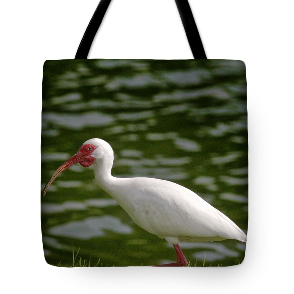 Bird Tote Bag featuring the photograph Stepping Out by Phill Doherty