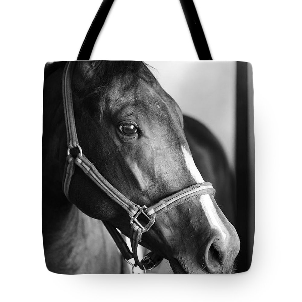 Horse Tote Bag featuring the photograph Horse and Stillness by Marilyn Hunt