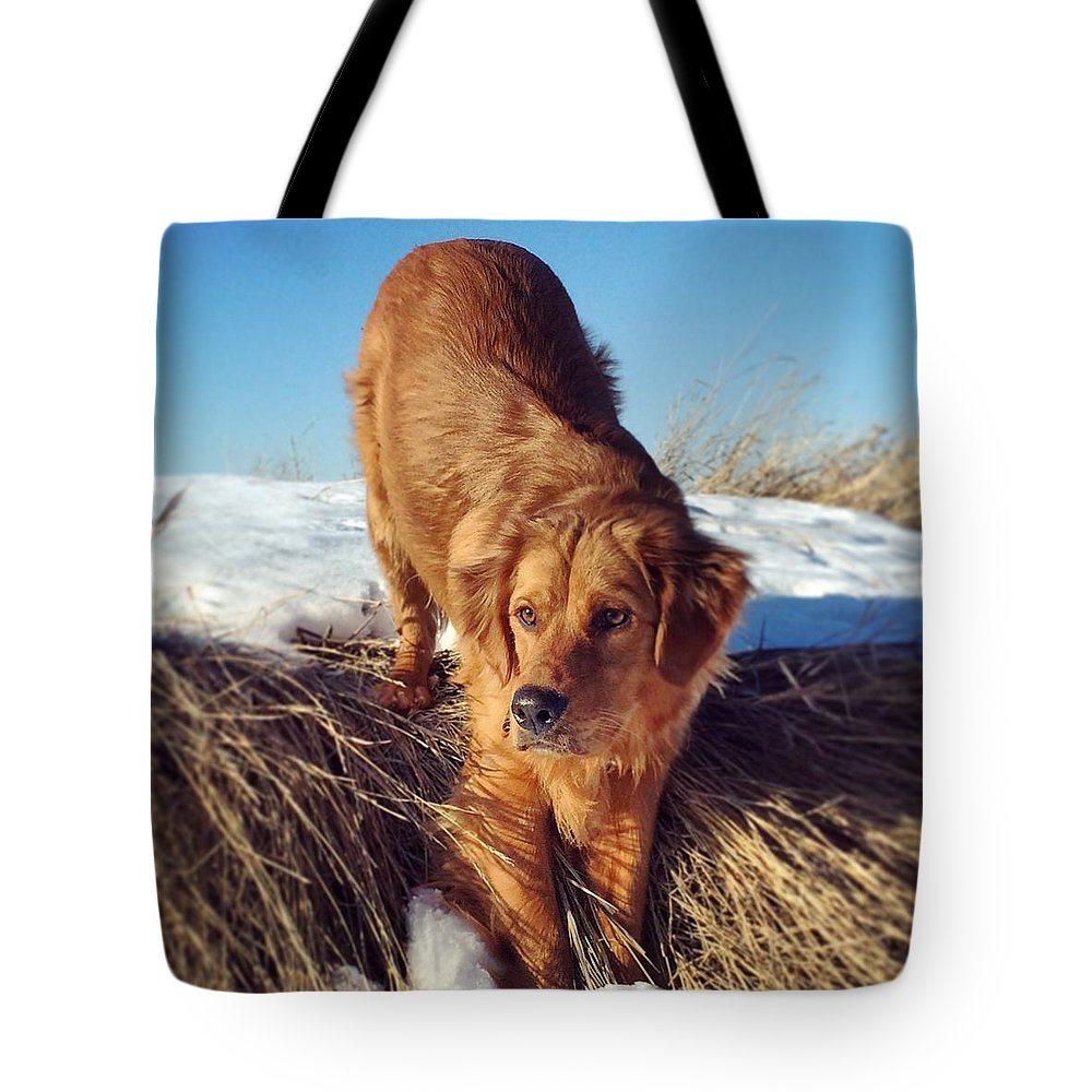 Golden Retriever Dog Farm Winter Golden Eyes Tote Bag featuring the photograph Stop And Stare by Naomi Ewaskow