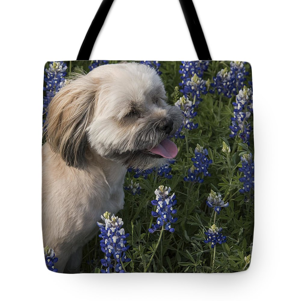 Muleshoe Bend Recreation Area Texas Bluebonnet Bluebonnets Flower Flowers Bloom Blooms Buddy Dog Dogs Animal Animals Creature Creatures Spring Tote Bag featuring the photograph Stopped To Smell The Bonnets by Bob Phillips