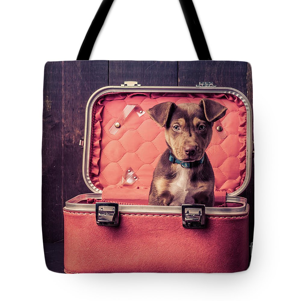 Animal Tote Bag featuring the photograph Stowaway by Edward Fielding