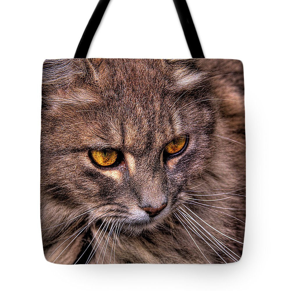 Cat Tote Bag featuring the photograph Stray Cat by David Patterson