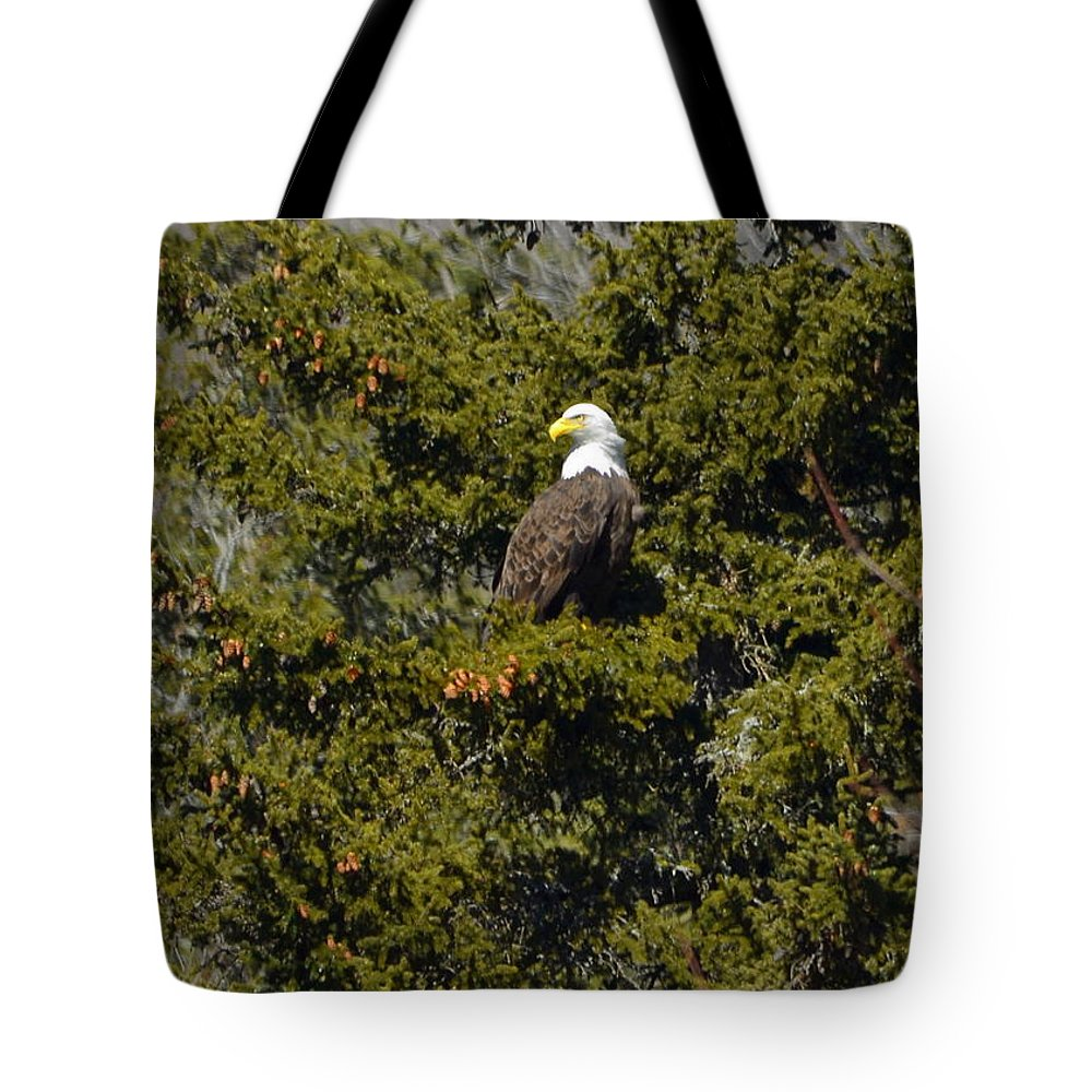 Eagle Tote Bag featuring the photograph Streamside Eagle by Harry Moulton