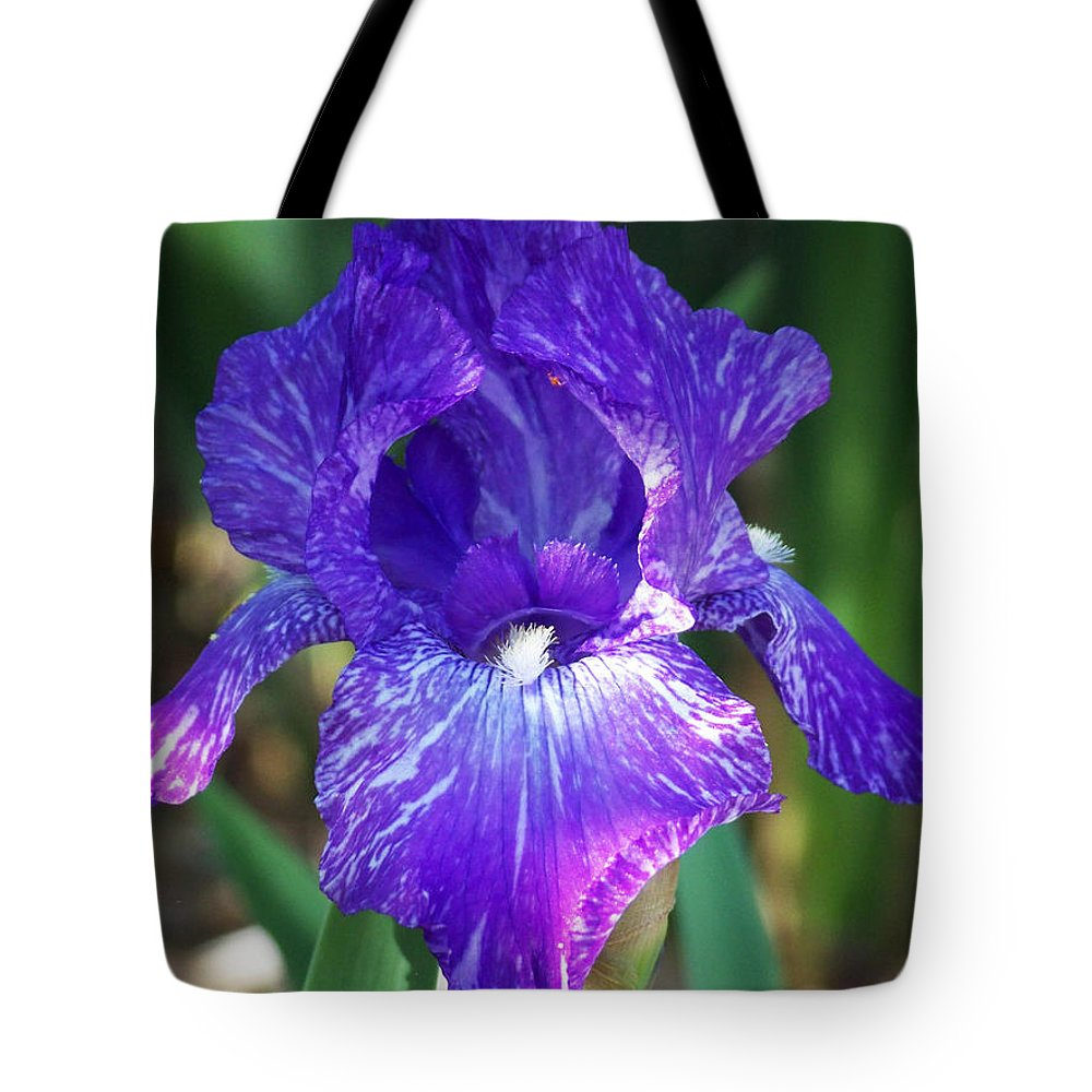 Flowers Tote Bag featuring the photograph Striped Blue Iris by Kathy McClure