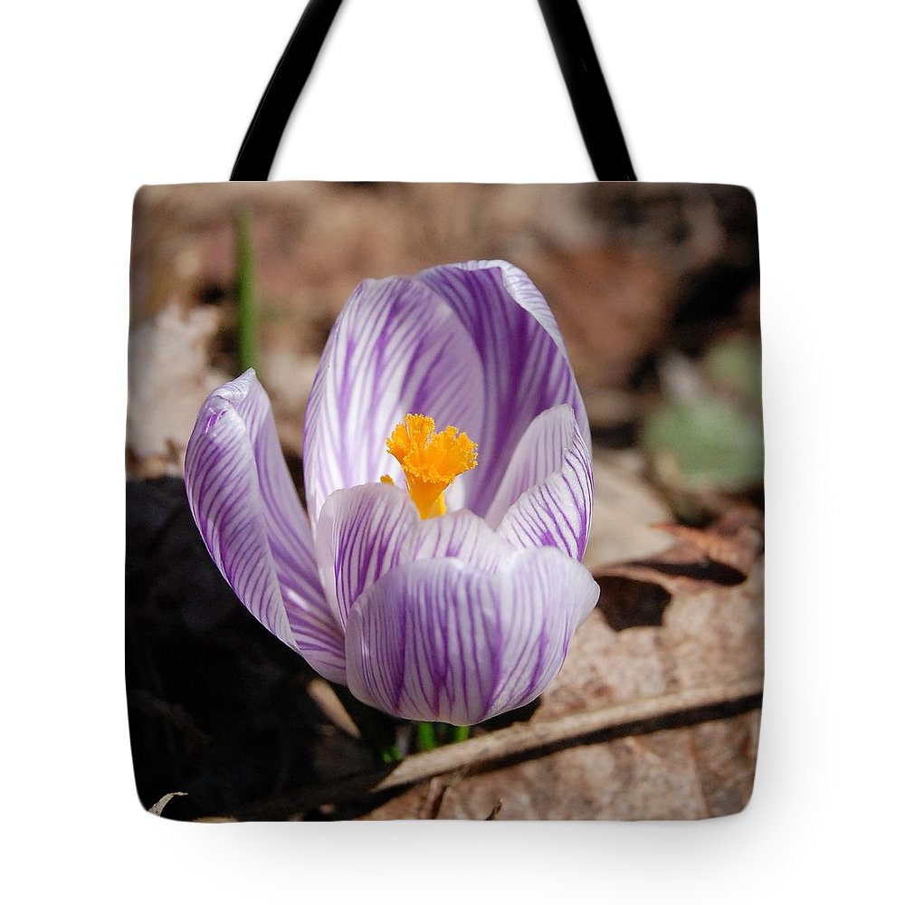 Digital Photography Tote Bag featuring the photograph Striped Crocus by David Lane