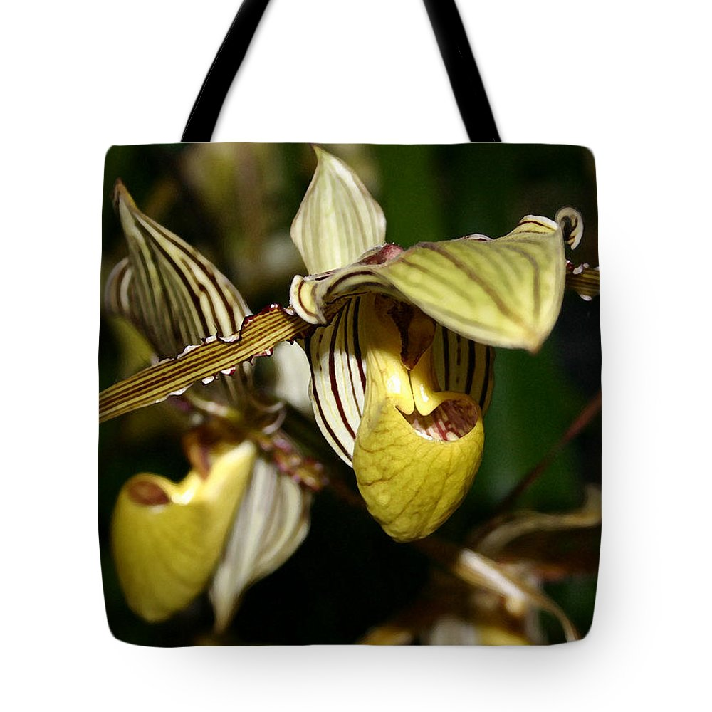 Orchid Tote Bag featuring the photograph Striped Orchid by Mary Haber