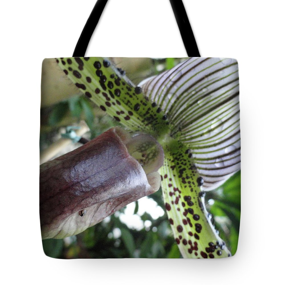 Orchid Tote Bag featuring the photograph Stripes Or Solids by Trish Hale
