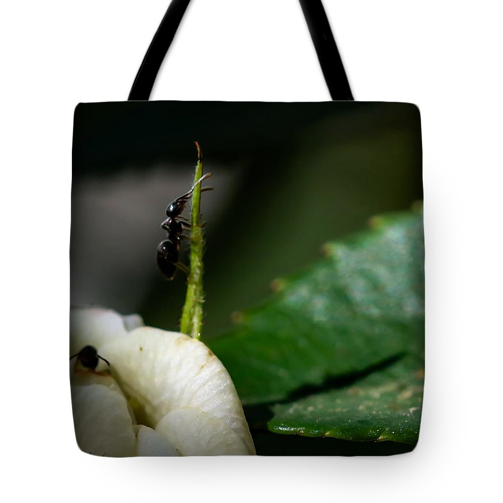Ants Tote Bag featuring the photograph Strive Hard by Ramabhadran Thirupattur