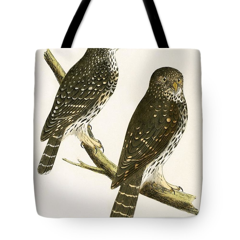 Bird Tote Bag featuring the painting Strix Pusilla by English School