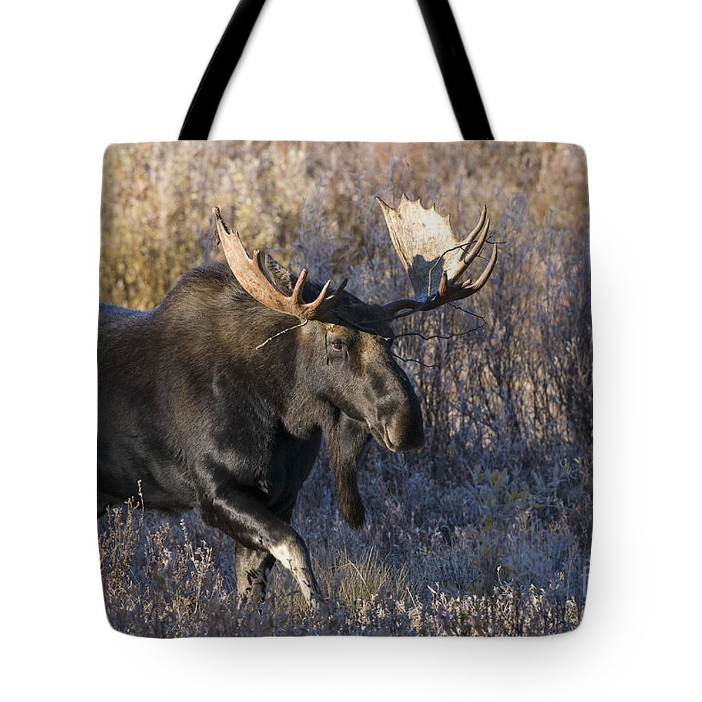 Grand Teton National Park Tote Bag featuring the photograph Strolling Through The Willows by Sandra Bronstein