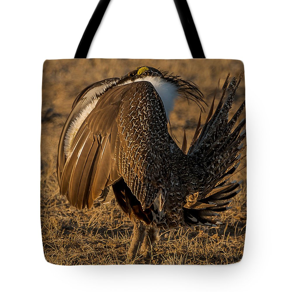 Sage Grouse Tote Bag featuring the photograph Strutting And Puffing by Yeates Photography