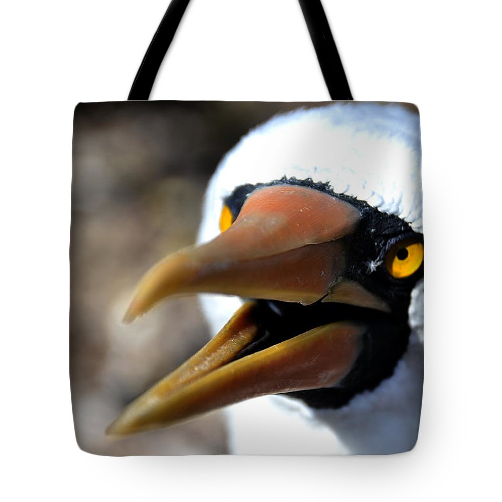 Galapagos Tote Bag featuring the photograph Stunning Nazca Booby by Harry Coburn