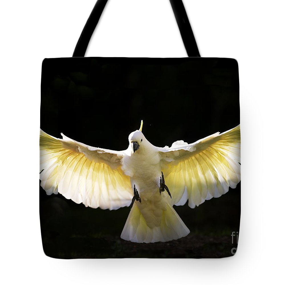 Sulphur Crested Cockatoo Australian Wildlife Tote Bag featuring the photograph Sulphur crested cockatoo in flight by Sheila Smart Fine Art Photography