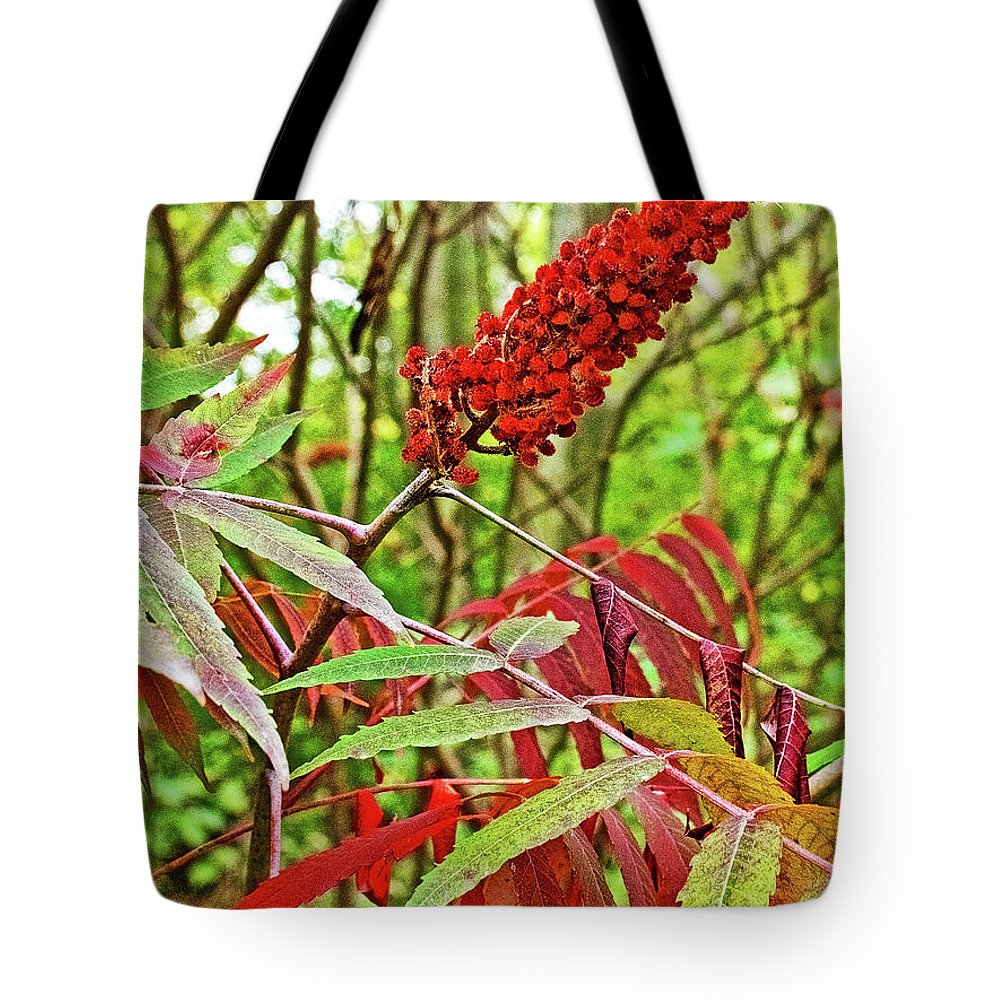 Sumac On White Pine Trail Near Rockford Tote Bag featuring the photograph Sumac On White Pine Trail In Kent County, Michigan by Ruth Hager