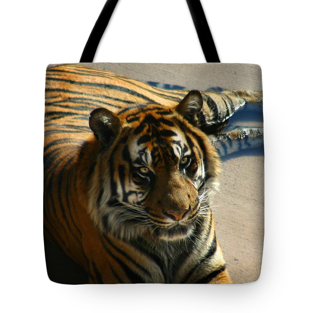 Tiger Tote Bag featuring the photograph Sumatran Tiger by Anthony Jones