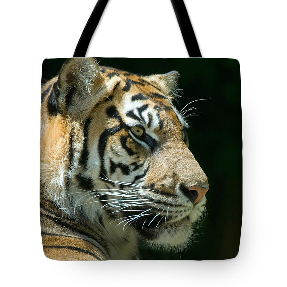 Tiger Lifestyle Products