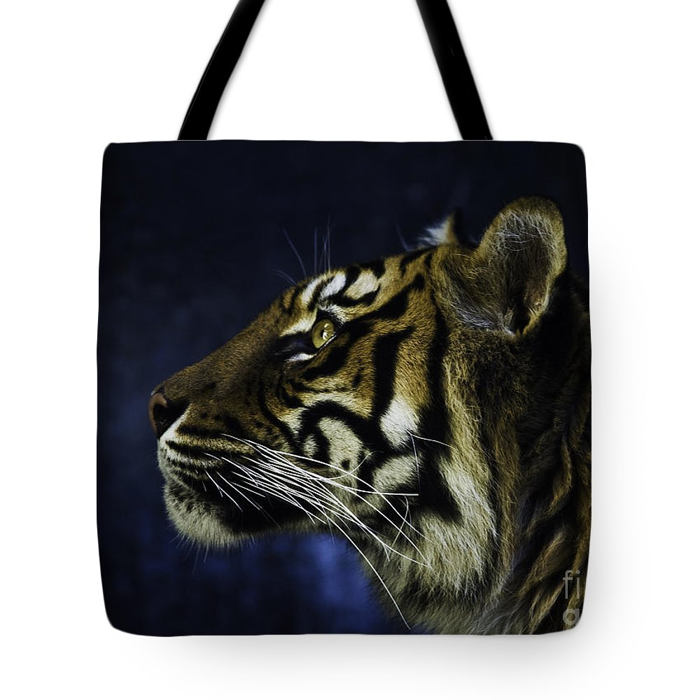 Sumatran Tiger Tote Bag featuring the photograph Sumatran Tiger Profile by Sheila Smart Fine Art Photography