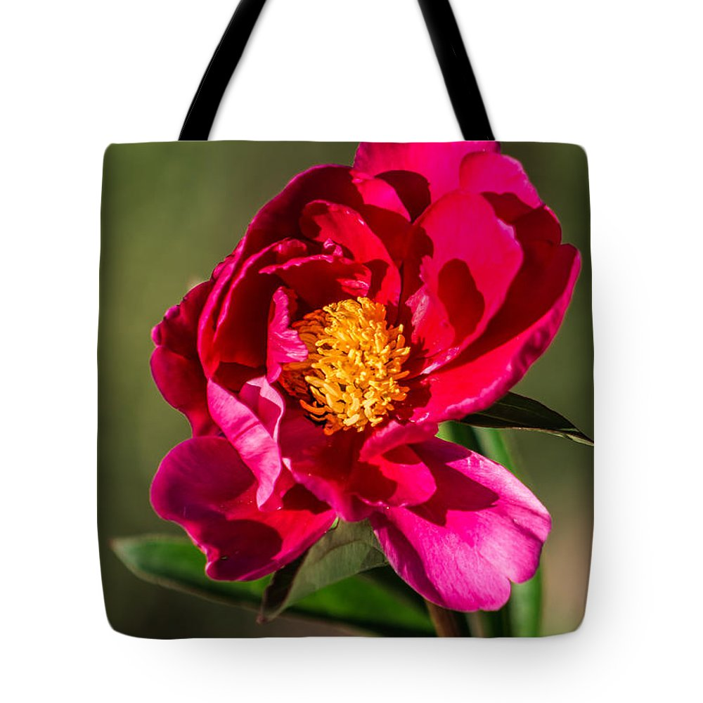 Flowers Tote Bag featuring the photograph Summer Flower II by Tammy Bryant