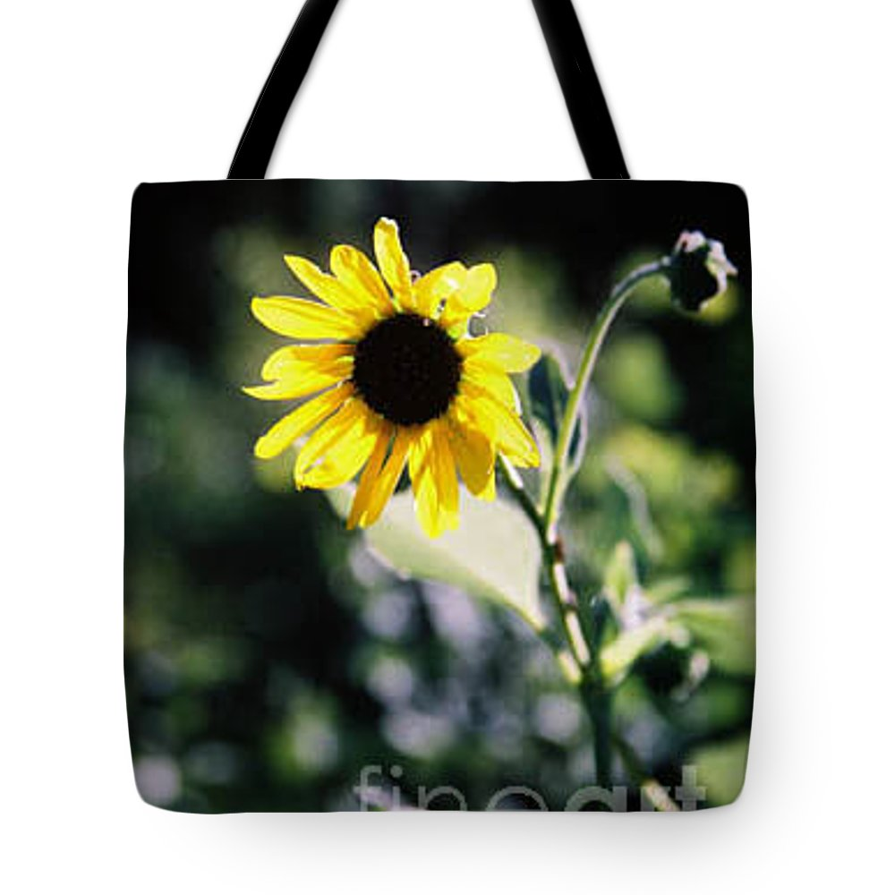 Sunflower Tote Bag featuring the photograph Summer Sunshine by Kathy McClure