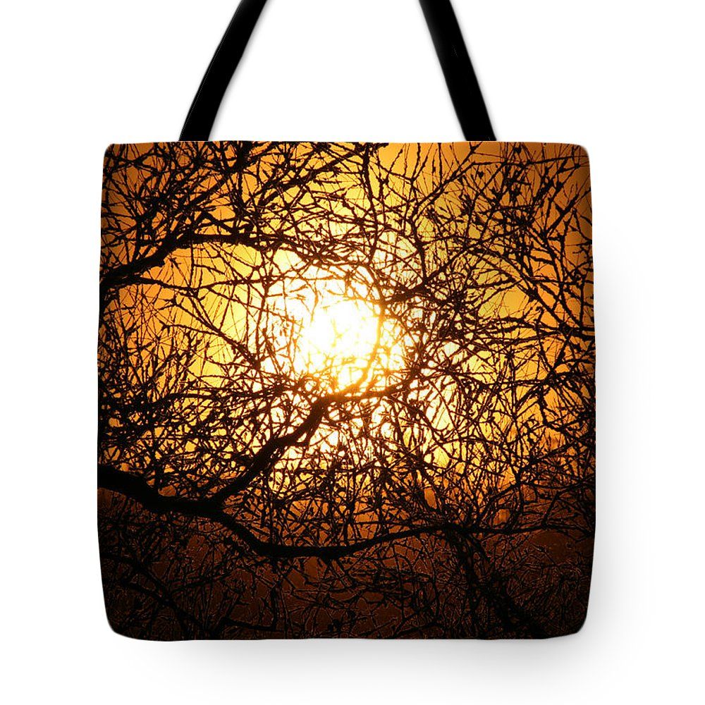 Sun Rise Trees Yellow Gold Plants Shine Colorful Bright Sky Tote Bag featuring the photograph Sun Tree by Andrea Lawrence