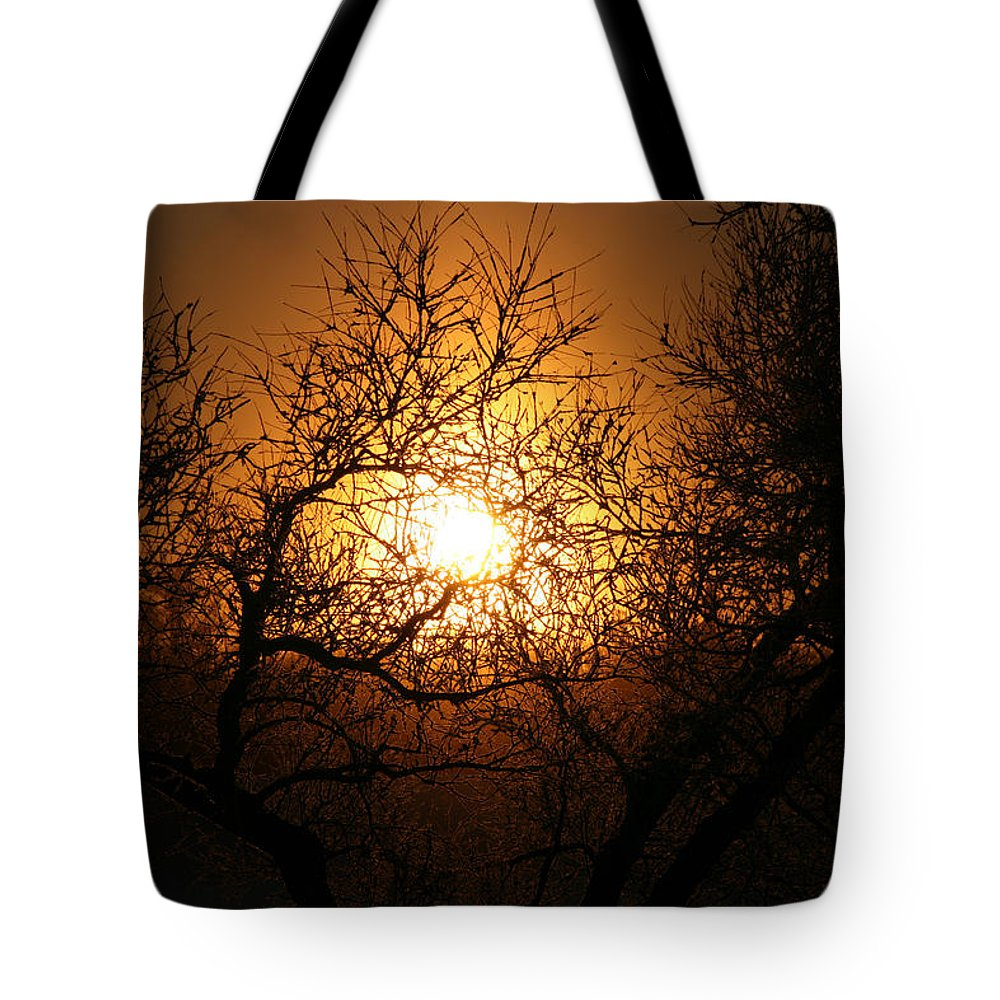 Sun Rise Trees Yellow Gold Plants Shine Colorful Bright Sky Tote Bag featuring the photograph Sun Trees by Andrea Lawrence