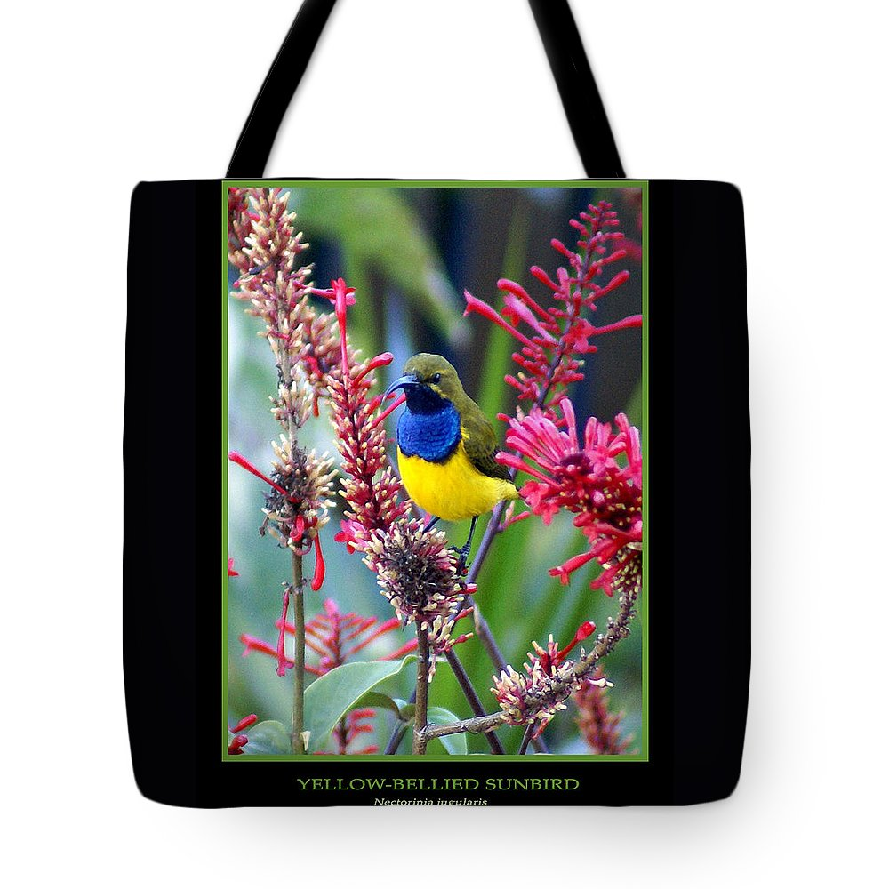 Animals Tote Bag featuring the photograph Sunbird by Holly Kempe