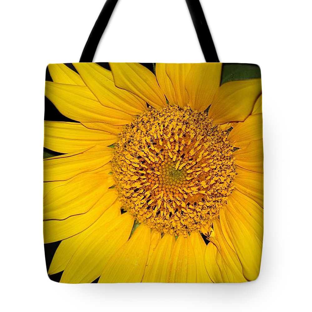 Nature Tote Bag featuring the photograph Sunflower At Dusk by Sheila Brown