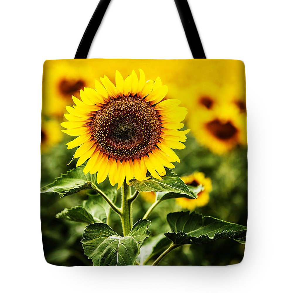 Agriculture Tote Bag featuring the photograph Sunflower Crops On A Farm In South Dakota by Carol Mellema