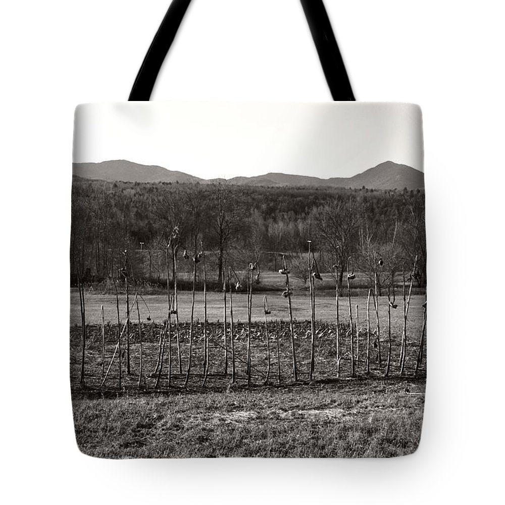 Tote Bag featuring the photograph Sunflower Plot by Heather Kirk