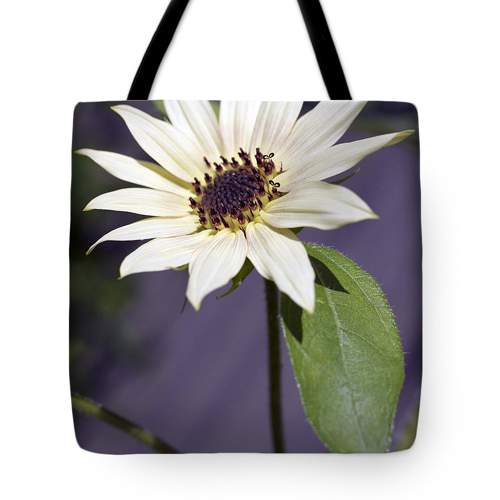 Helianthus Annus Tote Bag featuring the photograph Sunflower by Tony Cordoza