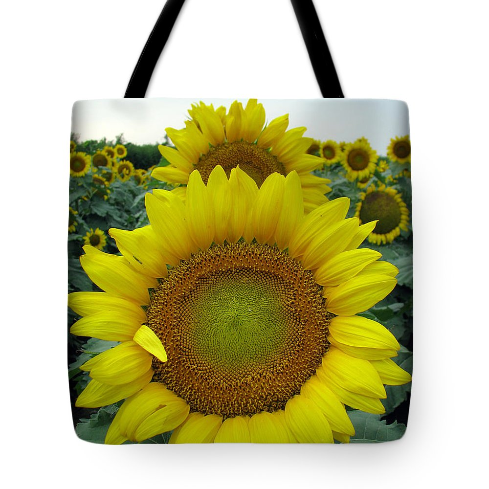 Sunflowers Tote Bag featuring the photograph Sunflowers by Amanda Barcon